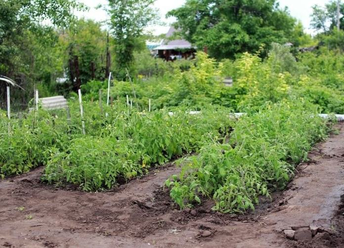 How to Choose and Star Vegetable Garden