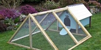 Best Frame Chicken Coop in your Backyard