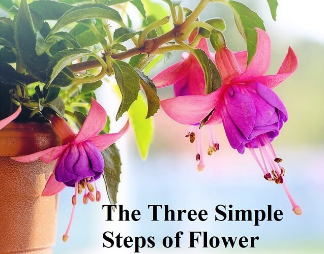 The Three Simple Steps of Flower Gardening