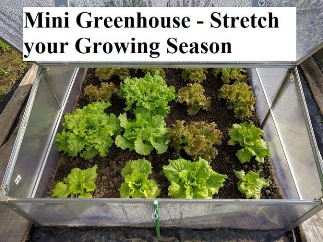 3 Ways to Extend Your Growing Season