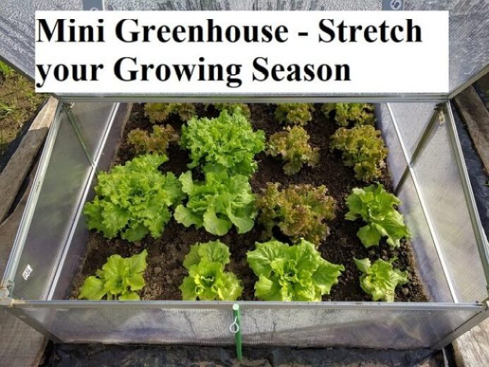 Mini Greenhouse - Stretch your Growing Season