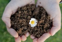 Soil and Soil Care
