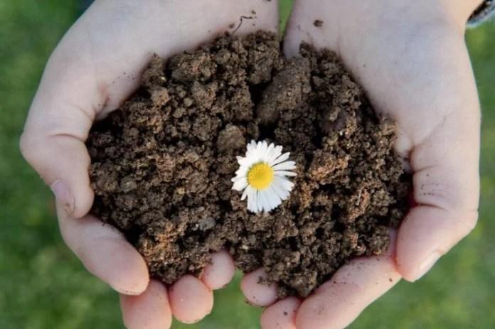 Soil and Soil Care