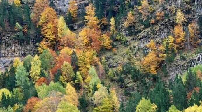 Most Colorful Conifers you Can Grow in Your Garde