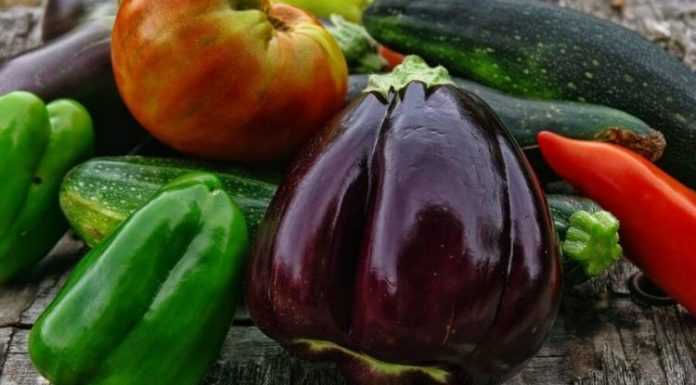 Peppers and Eggplants Like Nourishing Fertilizer