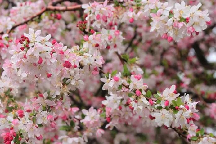 Spring Bloom - The Season of Wildflowers