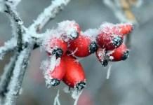 Winter Garden Guide - Trees and Shrubs