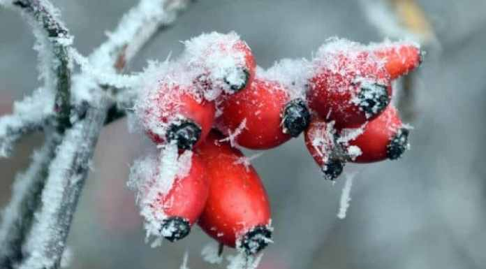 Winter Garden Guide - Trees and Shrubs