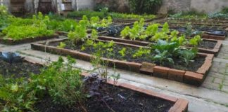 first vegetable garden