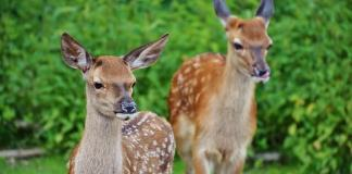 Gardening With (And Without) Deer