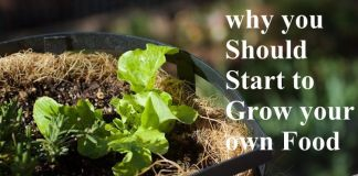 10 Reasons why you Should Start to Grow your own Food