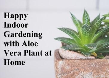 Indoor Gardening with Aloe Vera Plant