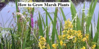 How to Grow Marsh Plants