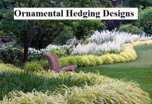 Ornamental Hedging Designs