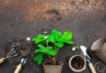 Create the Right Soil Mix for your Plants