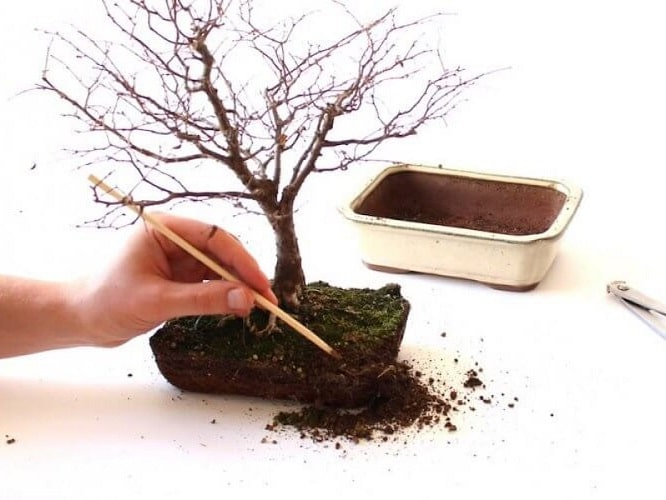 Why Bonsai Soil Is Different