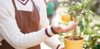 How to Buy Healthy Plants