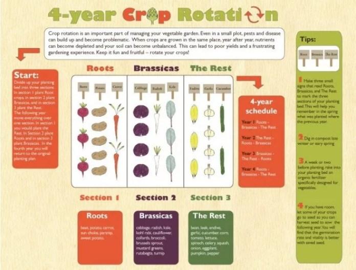 Vegetable Rotation in your Garden