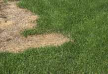Lawn Care Tips: What is Fertilizer Burn?