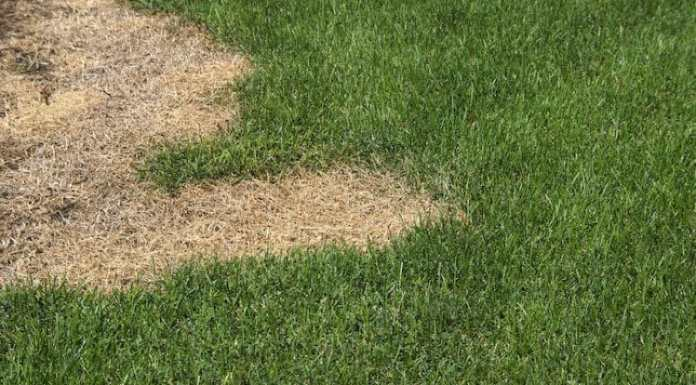 Lawn Care Tips: What is Fertilizer Burn?
