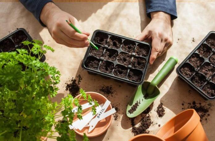 Top 05 Steps to Grow Veggies in Containers