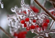 Brighten Up Your Garden with Winterberry