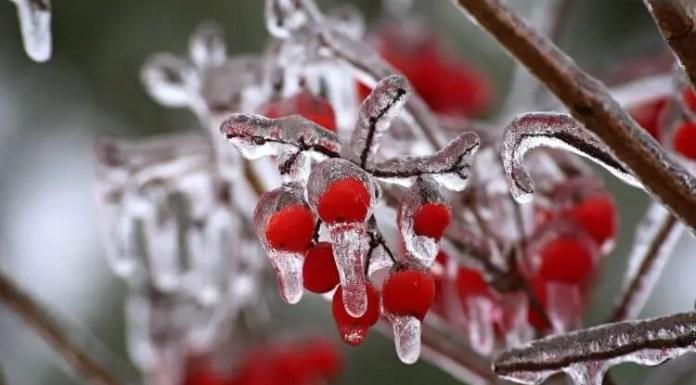 Brighten Up Your Garden with Winterberry