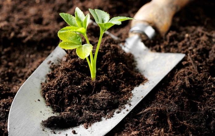 Organic Fertilizers for Home - Growing Gardeners