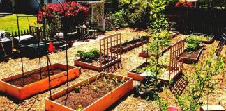 Best Vegetable Garden Layout Ideas and Designs
