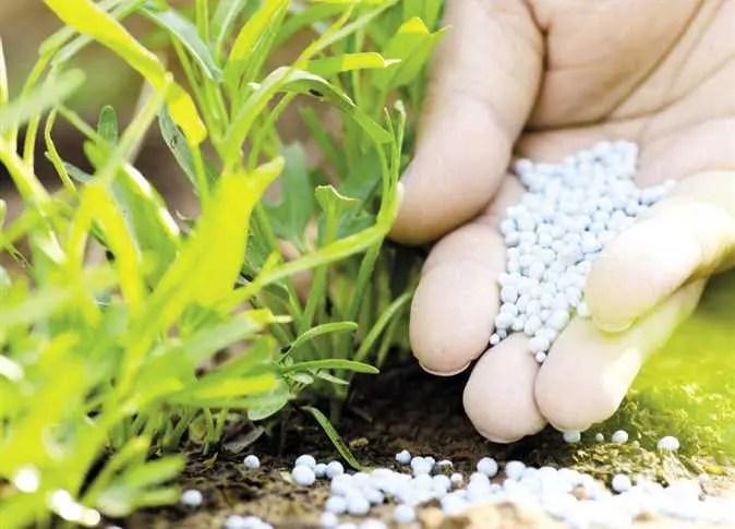 Characteristics of Fertilizers for Plants