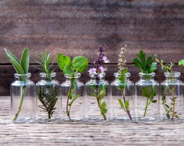 Growing Plants from Cuttings - Gardening Tips