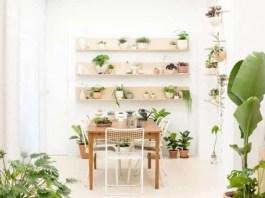 Indoor Gardening the Feng Shi Way