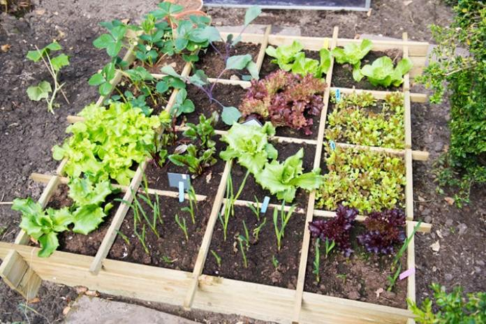 Square Foot Gardening - Complete Guide