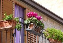 Top Secrets of Winning Window Boxes