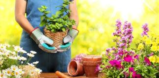 Useful House Gardening Tips For Beginners