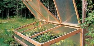 Cold Frame Gardening For a Longer Growing Season-min