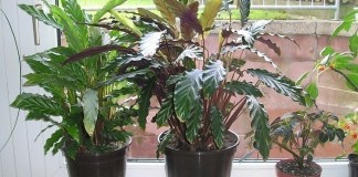 Most Indoor Plants Maintenance