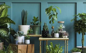 10 Perfect Plants For People Who Don't Have A Green Thumb