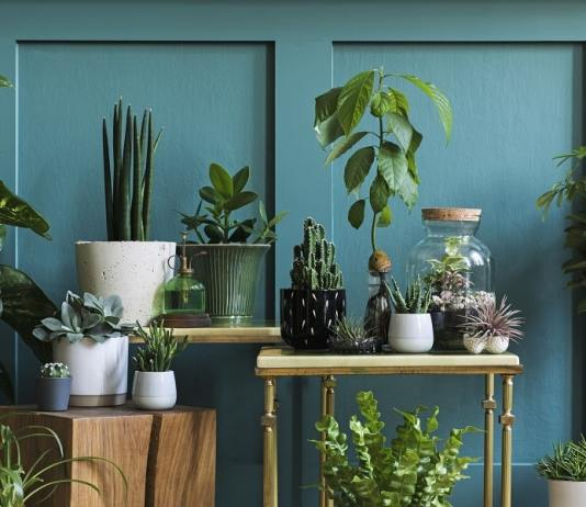 10Perfect Plants For People Who Don't Have A Green Thumb