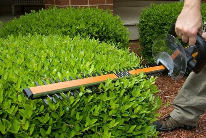 How to Trim a Hedge - Top Hedge Trimming Tips