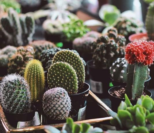 Best Tips on Selecting the Right Plants for Your Home