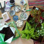 Terrarium Fairy Garden Fairy Gardening Fairy Terrarium