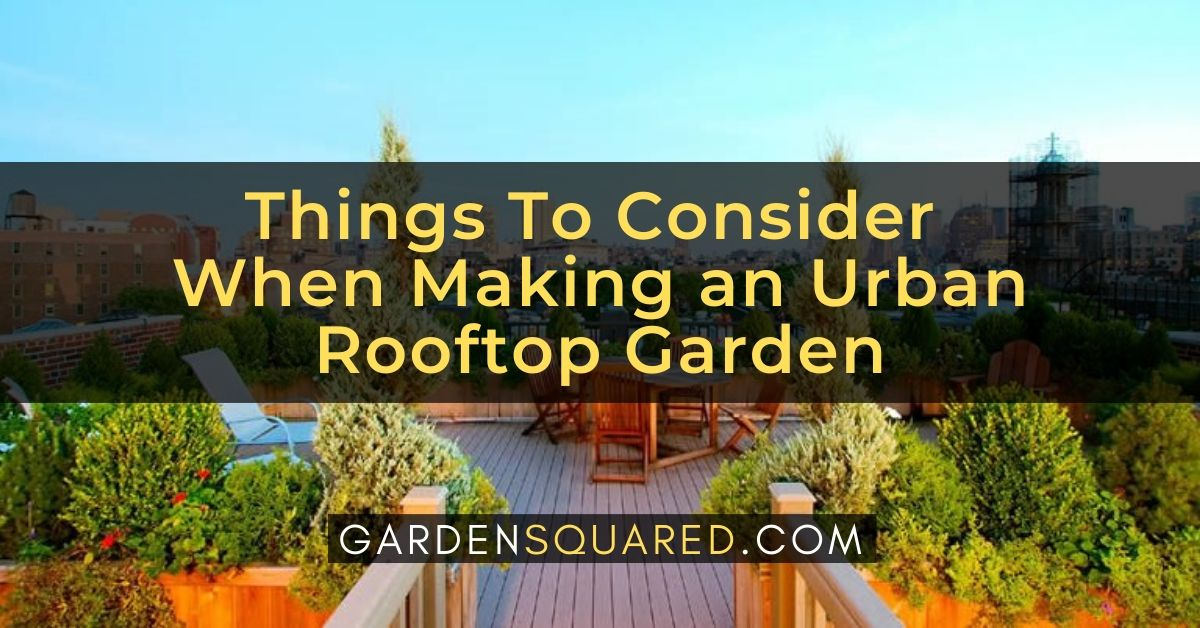 Things To Consider When Making An Urban Rooftop Garden