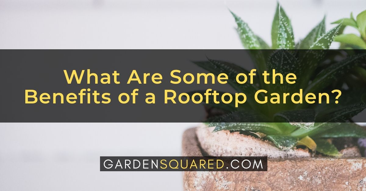 What Are Some Of The Benefits Of A Rooftop Garden
