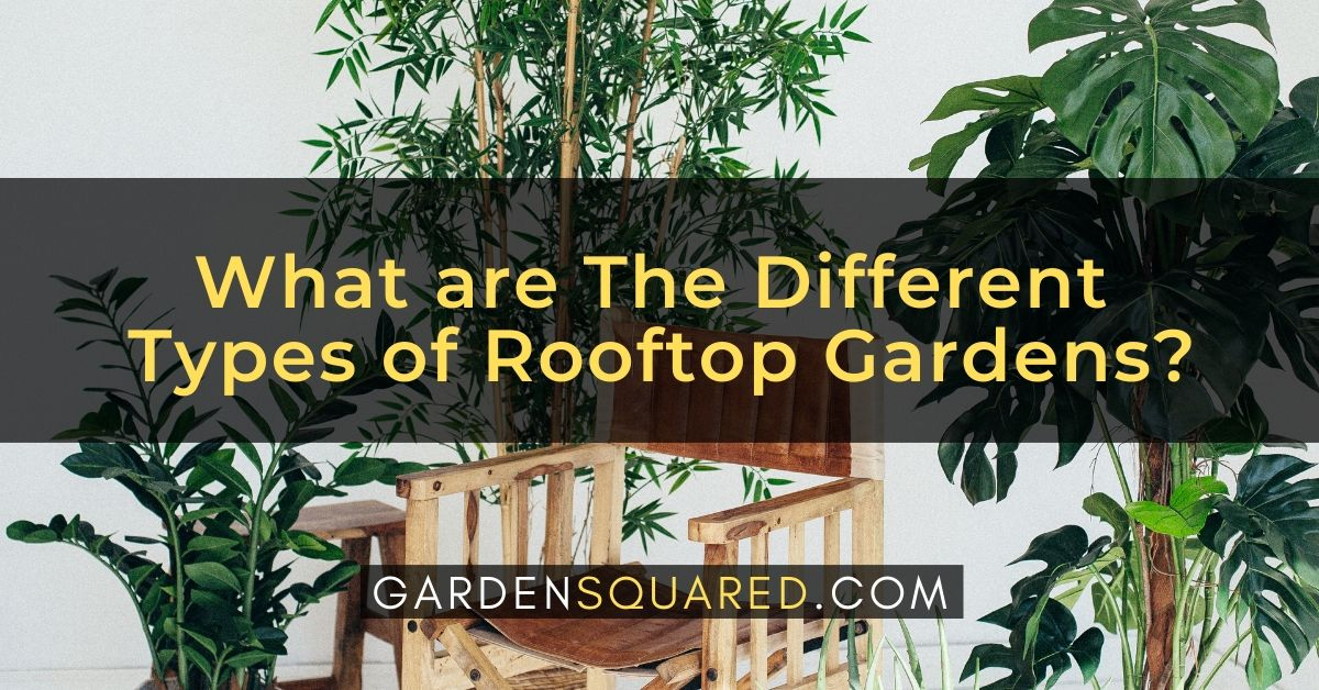 What Are The Different Types Of Rooftop Gardens