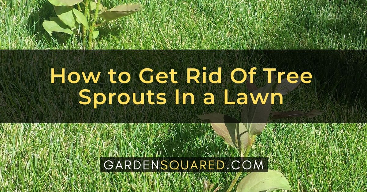 how to get rid of tree sprouts in a lawn