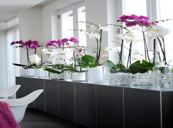 Indoor Plants That Can Be Grown in Water Vases
