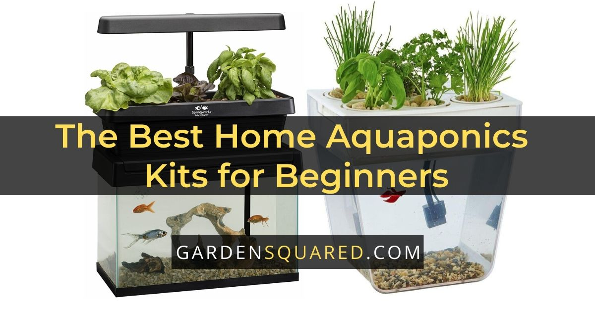 The Best Home Aquaponics Kits for Beginners