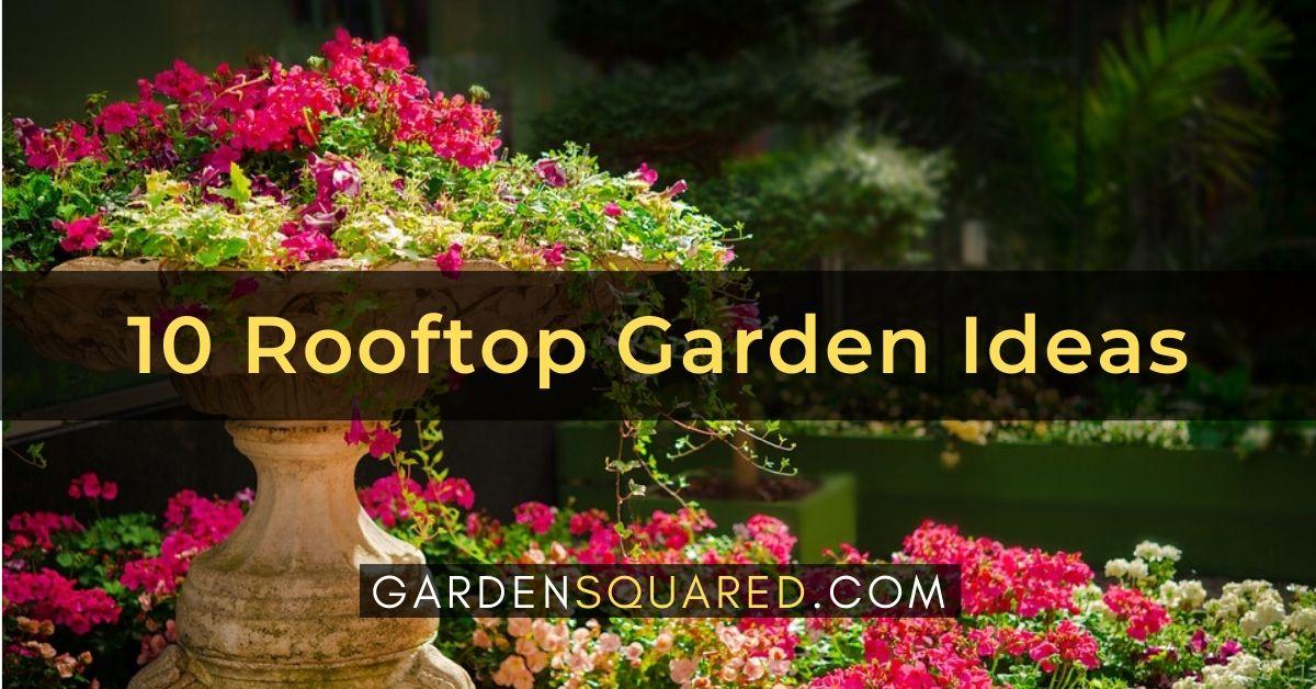 Best Rooftop Garden Ideas