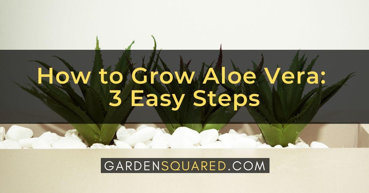 How To Grow Aloe Vera 3 Easy Steps